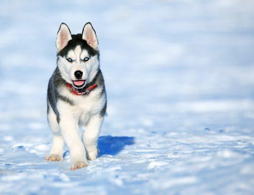 Ortopedia del cucciolo