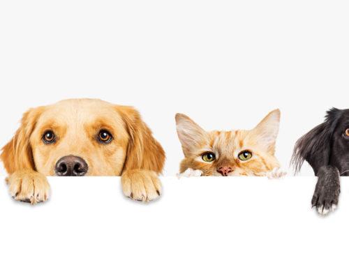Controllo cardiologico nel cane e gatto adulto