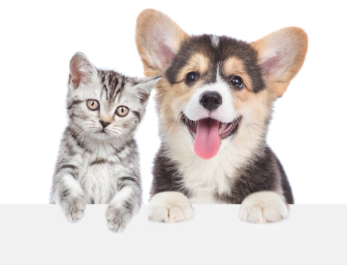 Controllo cardiologico nel cane e gatto cucciolo