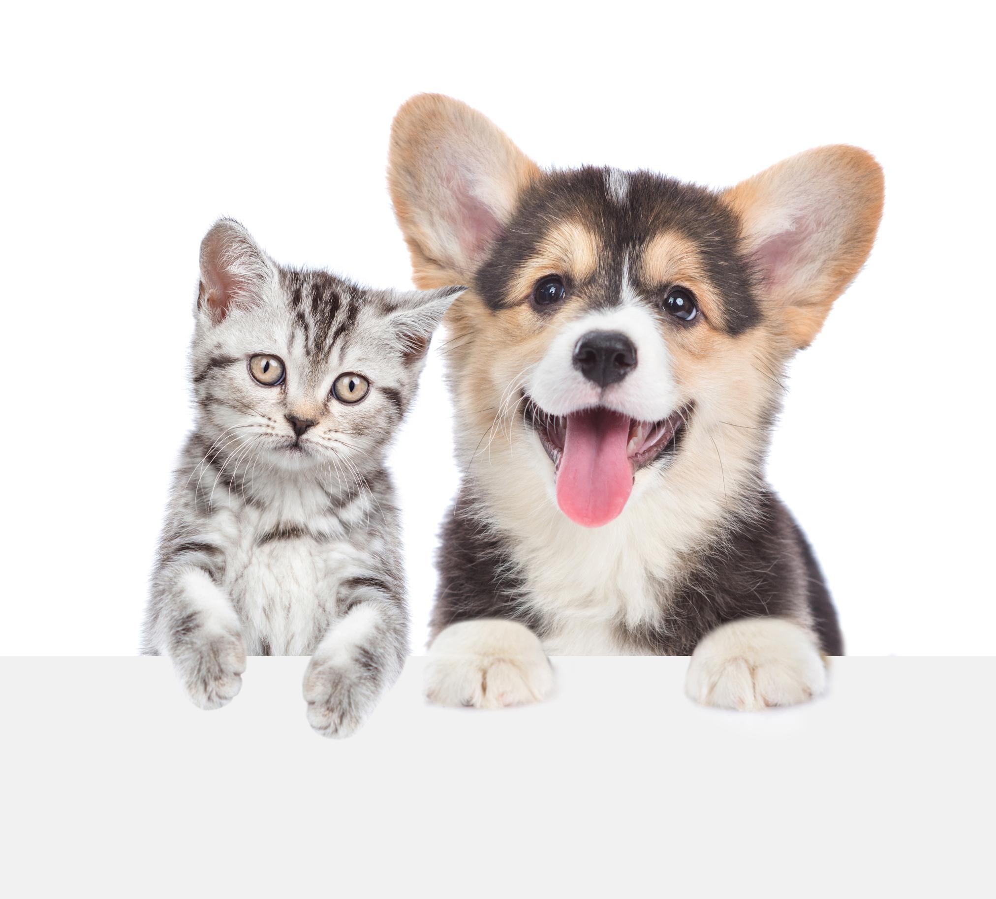 Controllo Cardiologico Nel Cane E Gatto Cucciolo Centro