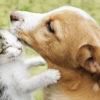 Come si trasmettono i parassiti intestinali al cane ed al gatto