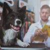 La ricetta elettronica veterinaria