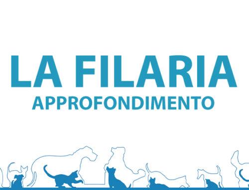 La Filaria